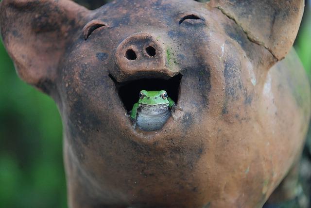 tree-frogs-517346_640_funnytools.pixabay